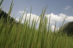 Rice the Sky, Sapa,